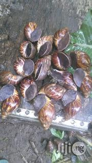 Snail Meat Still The Best | Other Animals for sale in Ogun State, Ado-Odo/Ota