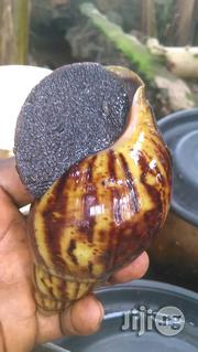 Snail For Sale | Other Animals for sale in Ogun State, Ado-Odo/Ota