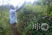 Agric Farm Land For Sale | Land & Plots For Sale for sale in Ogun State, Obafemi-Owode