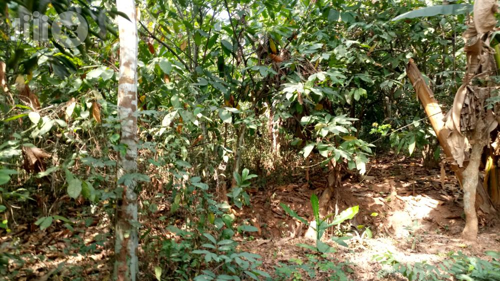 Farm Land At Arege Odeda For Sale At 200k Per Acre