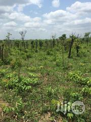 500 Acres At Oje Village Behide Shina Farm Iseyin Oyo Express Road | Land & Plots For Sale for sale in Oyo State