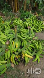 Plaintain Suckers ( Cameroun Hybrid) | Feeds, Supplements & Seeds for sale in Lagos State, Ikorodu