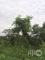 Very Fertile And Quality 600 Acres Of Land For Lease At Cheap Rate At Iseyin | Land & Plots for Rent for sale in Oyo State