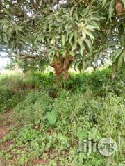 500 Acres With C Of O Along Oyo/Ogbomosho Road | Land & Plots For Sale for sale in Oyo State, Ogbomosho South