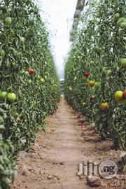 Technical Experts | Farming & Veterinary CVs for sale in Abuja (FCT) State, Bwari