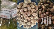 Silky Kola(Goron Tula) | Feeds, Supplements & Seeds for sale in Abuja (FCT) State, Kuje