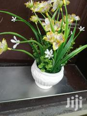 Beautiful Potted Flowers At Sales Nationwide,Order Now   Garden for sale in Benue State, Katsina-Ala