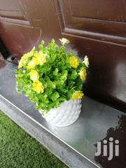 Get Affordable Beautiful Potted Flowers At Retail Prices | Garden for sale in Ekiti State, Ado Ekiti