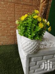 Get Beautiful Flowers For Decorating Of Home At Low Cost Nationwide | Garden for sale in Bayelsa State, Kolokuma/Opokuma