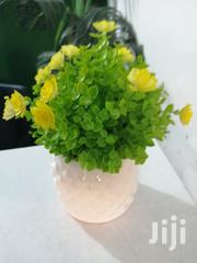 Get Beautified Cup Mini Flowers For Decor Today   Garden for sale in Ebonyi State, Ohaukwu