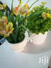Indoor Beautiful Cup Flowers For Decor,Order Now | Garden for sale in Kano State, Kura