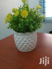 Garden Cup Flowers For Sale | Garden for sale in Kogi State, Ankpa