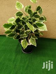 Artificial Pot And Plants Decorations | Garden for sale in Rivers State, Khana