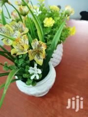 Beautiful Flowers On Cups For Decoration At Sales | Garden for sale in Delta State, Burutu