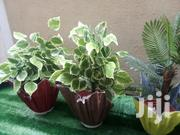Used Polymer Can Be As A Vase Without Flowers | Home Accessories for sale in Lagos State, Ikeja