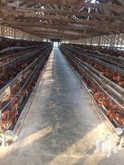 Carver Point Of Lay Chickens | Livestock & Poultry for sale in Lagos State, Ikorodu