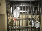 African Grey Talking Parrot | Birds for sale in Lagos State, Lekki Phase 1