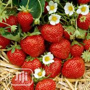 Fresh Strawberry Fruit Always In Season Jan To Dec | Meals & Drinks for sale in Plateau State, Jos