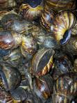 Snail Meat | Other Animals for sale in Ado-Odo/Ota, Ogun State, Nigeria