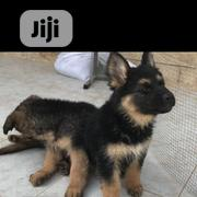 Baby Female Purebred German Shepherd Dog | Dogs & Puppies for sale in Lagos State, Ifako-Ijaiye