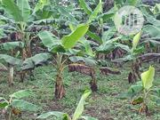 Land for Plantain, Cocoa and Oilpalm | Land & Plots For Sale for sale in Osun State, Aiyedade