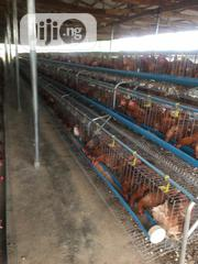 Battery Cage Major Fabricator In Lagos   Farm Machinery & Equipment for sale in Lagos State, Ikeja