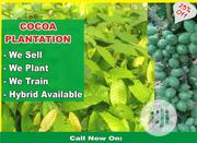 Farm Land For Sale | Land & Plots For Sale for sale in Ogun State, Remo North