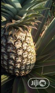 Make 4 Million And More Yearly By Planting An Acre Of Hybrid Pineapple | Meals & Drinks for sale in Ogun State, Abeokuta North