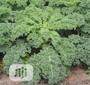 1kg Of Kale Cabbage   Meals & Drinks for sale in Lagos State, Lagos Island