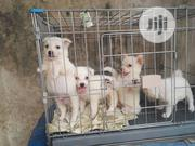 Baby Female Purebred American Eskimo Dog | Dogs & Puppies for sale in Lagos State, Amuwo-Odofin