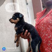 Baby Female Mixed Breed Rottweiler | Dogs & Puppies for sale in Lagos State, Ifako-Ijaiye
