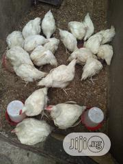 Broilers For Sell | Livestock & Poultry for sale in Lagos State, Apapa