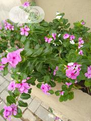 Watercress | Landscaping & Gardening Services for sale in Lagos State, Ajah