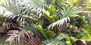 Palm Nursery | Feeds, Supplements & Seeds for sale in Delta State, Ethiope West
