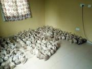 Bags Of Mushroom For Growing | Feeds, Supplements & Seeds for sale in Lagos State, Ikorodu