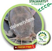 Well Cultured Fresh Catfish | Meals & Drinks for sale in Lagos State, Ikorodu