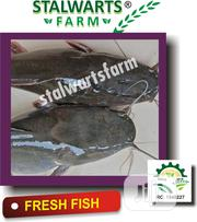 Fresh Catfish | Meals & Drinks for sale in Lagos State, Ikorodu