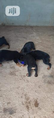 Baby Male Purebred Rottweiler | Dogs & Puppies for sale in Lagos State, Ojo