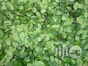 Organic Moringa Olifera Leaves Wholesale | Vitamins & Supplements for sale in Plateau State, Jos